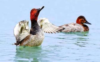 稀客稀客!四川德阳迎来10多只低危保护动物过冬