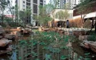 天津明年市区将建20处园林花境景观