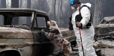 美山火遇难人数上升 寻尸犬进入小镇