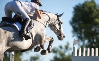 杭州亚运会将有130余匹马来到桐庐 为何说筹办马术比赛很麻烦