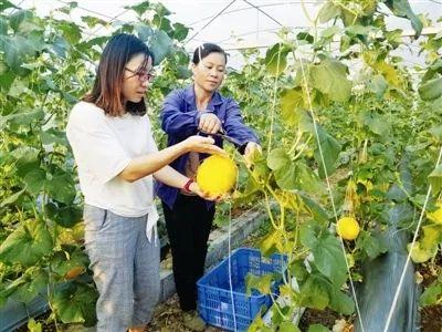 """金城江区""""三建三联""""发展壮大村集体经济"""