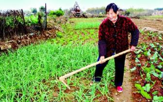 孝昌82岁婆婆捐出万元卖菜款 资助贫困留守学生