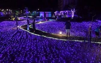 宛如薰衣草紫色花海 泡美人汤赏梦幻灯海
