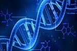 寻找长寿的基因 基因组合影响寿命?