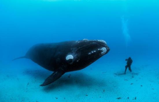 鲸鱼耳垢竟是个巨大信息库:10年数据反应环境变化