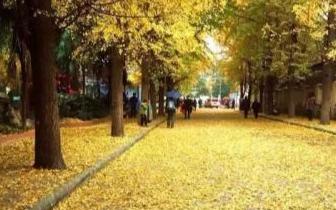 唐山进入最美落叶季 市民呼吁留住秋天的味道