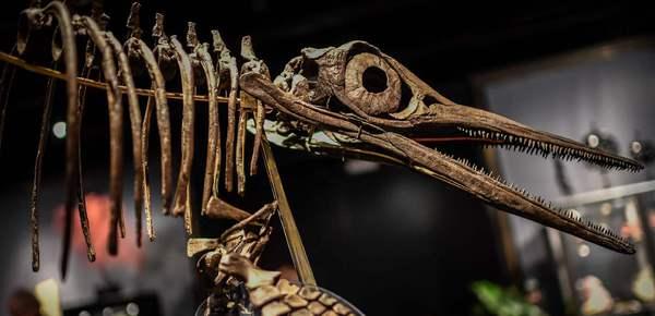 法国恐龙骨架将被拍卖