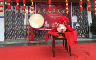 """年关记忆  寻味乡愁!去武隆年猪文化节过足""""年瘾"""""""