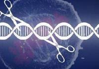 港大艾滋病研究所所长谈基因编辑婴儿:不伦理