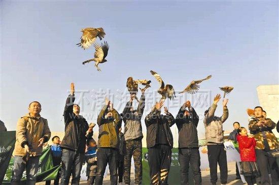 3个月野化训练 唐山12只被救助猛禽放飞野外
