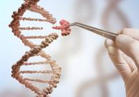 国际生物伦理学者批基因编辑婴儿实验:威胁未来