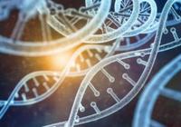 利用纳米磁铁对体内CRISPR/Cas9基因组编辑进行