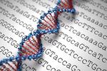 新研究确认35个慢性肾病风险相关基因