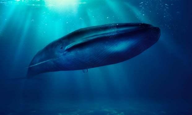 维持南极水域营养平衡,鲸鱼的粪便竟如此珍贵?