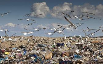 明年1月1日起 我市生活垃圾分类投放