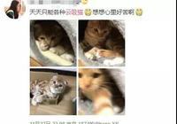"""网友炸锅!浙大硕士毕业论文写""""云吸猫是精神鸦片"""""""
