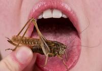 """把可以""""爆浆""""的大虫子塞进嘴,你能想象那种酸爽"""