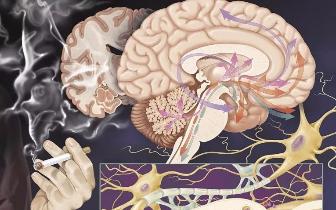 """""""你的大脑被绑架了"""",这就是毒品上瘾的可怕真相"""