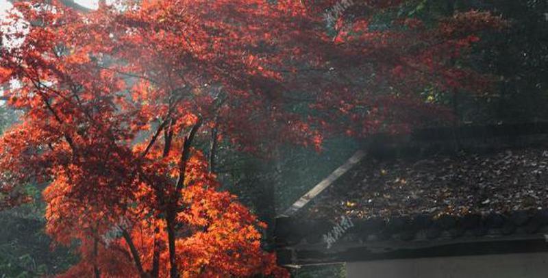 初冬岳麓山的斑斓色彩