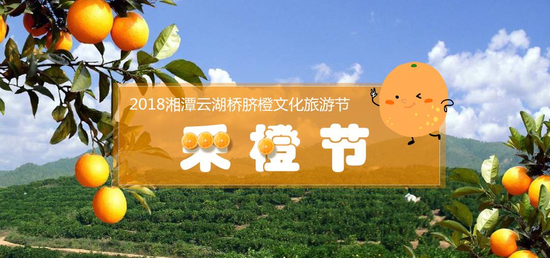 湘潭云湖桥脐橙文化旅游节等你来摘橙子!