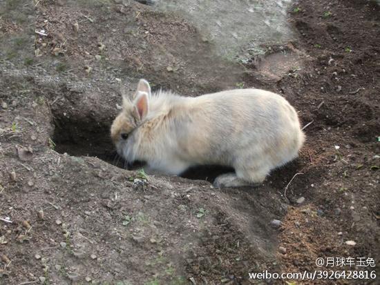 这只看过最多星星的兔子,在月球上已经五年了