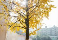 中学生在校园银杏落叶上写青春字句 网友:好纯真