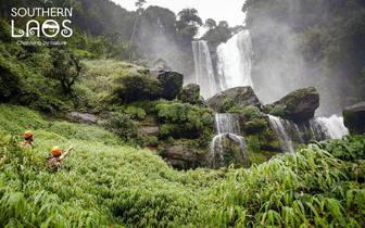 占巴塞Donghuasao国家森林保护区