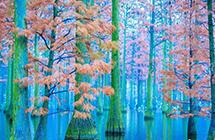 涨渡湖湿地初冬美景宛如仙境