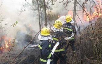 自贡山火威胁民居,消防半小时扑灭