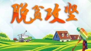 自治区领导房灵敏深入环江毛南族自治县研