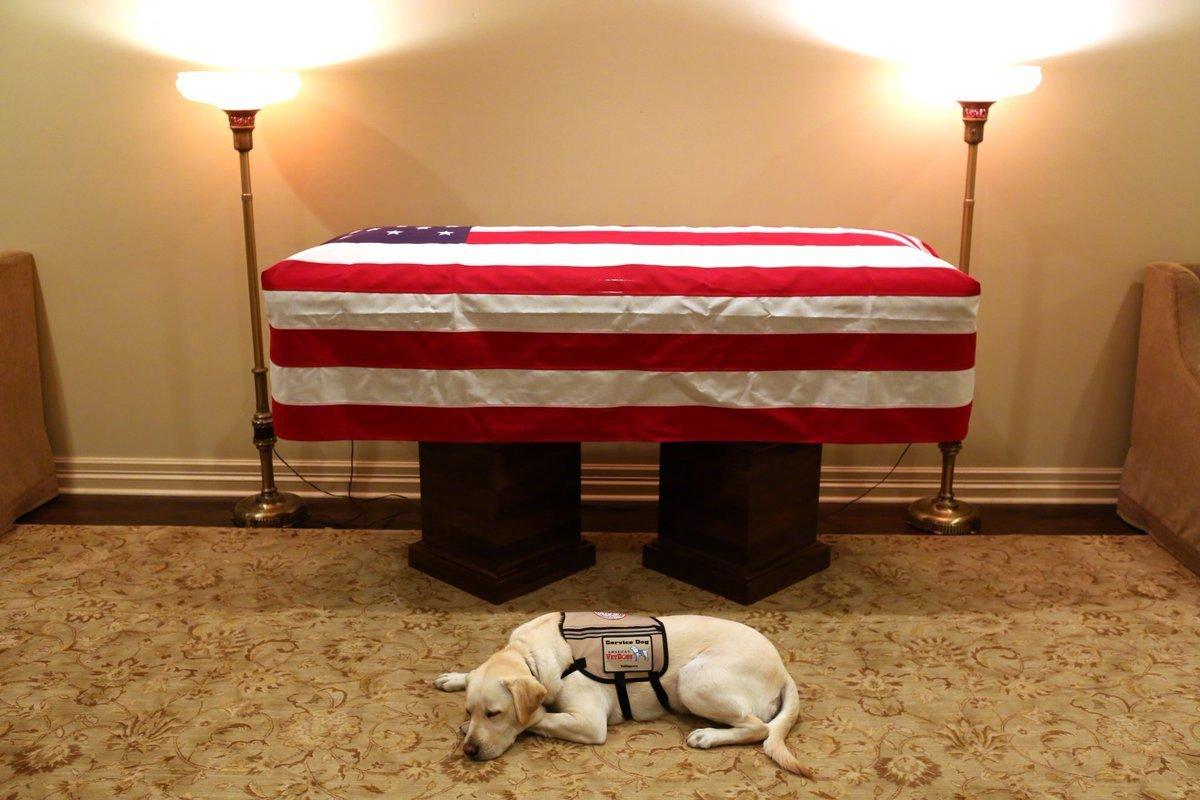老布什的服务犬有了新任务:将帮助受伤士兵-bob娱乐app