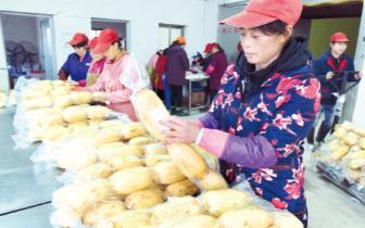 大悟县: 精装莲藕俏销海外 年产值2300多万元