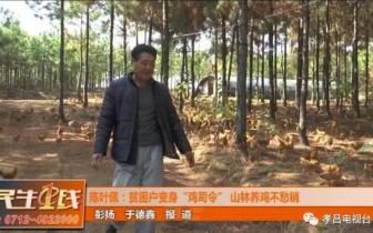 """孝昌贫困户变身""""鸡司令"""",山林散养不愁销!"""