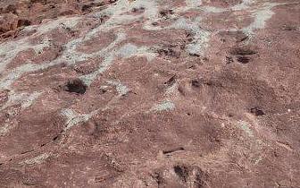 凉山昭觉再次发现大规模恐龙足迹群 面积上万平方米