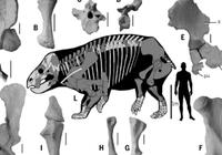 """人类的""""远亲""""体型赛大象,""""直系表亲""""小且像鼩鼱"""