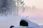 大雪:巧保暖 重除燥 赏冰雕