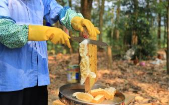 长征镇什仍村将组织为期2个月的养蜂技术培训班