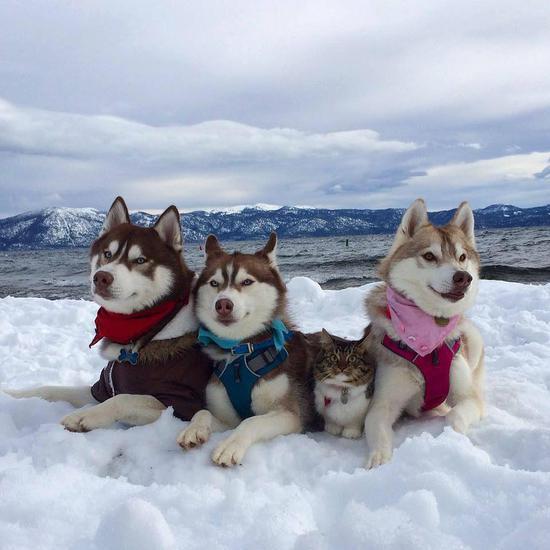 作为灰狼亚种的狗狗们也是社会化的群居动物,冰天雪地里紧紧护好小