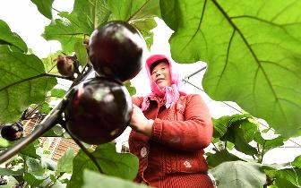 乐亭:科技创新助兴农 提质又增效