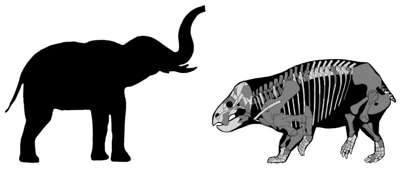 人类的远亲体型赛大象,直系表亲小且像鼩鼱