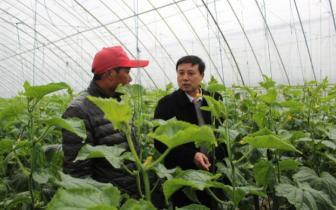 孝南区农业局积极开展雨雪低温灾害技术指导