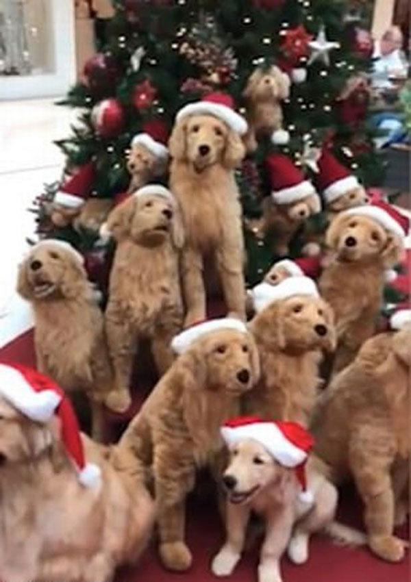 真假难辨!巴西商场混搭机器狗和宠物犬喜迎圣诞