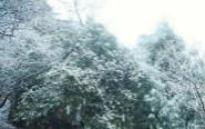 """临安:""""大雪""""节气前 天目山降雪"""