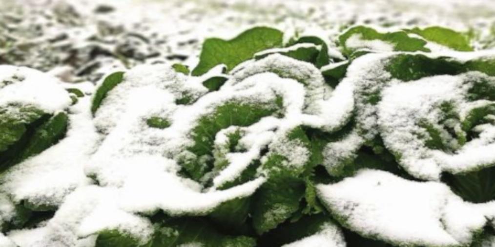 """大雪时节小雪飘 周末继续""""美丽冻人"""""""