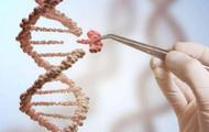 哈佛将编辑人类精子基因 以降低阿尔茨海默病风险