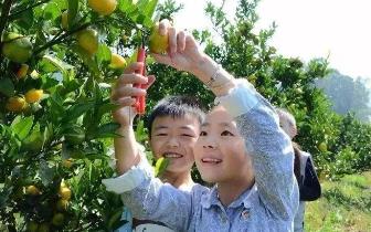橘子熟了,来盘龙品尝这个充满果香的乐园!