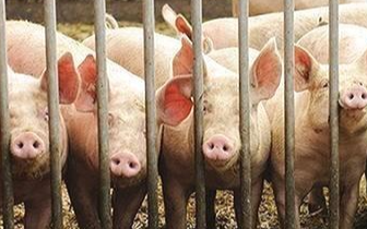 唐山对非洲猪瘟防控工作进行安排部署