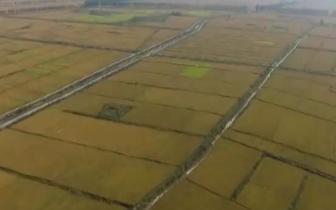 丰南区深入推进农业供给侧结构性改革