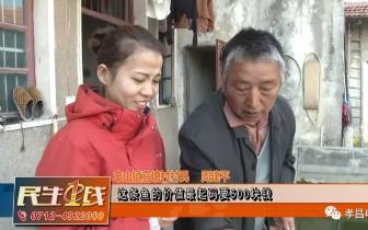 """孝昌村民回乡养金鱼年入百万,水塘变身""""聚宝盆""""!"""
