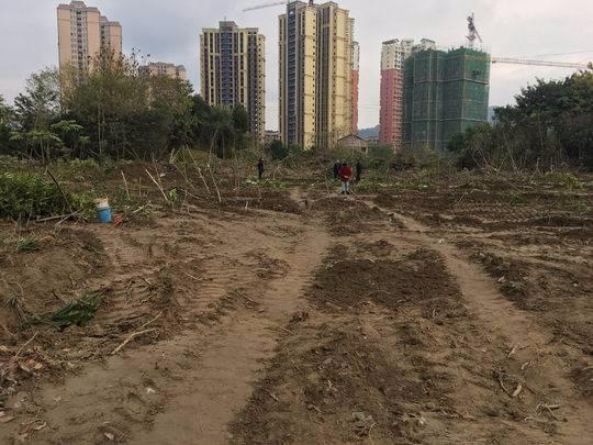 百万苗圃被毁后续: 苗圃土地10年前统征为国有 征地费及青苗费已